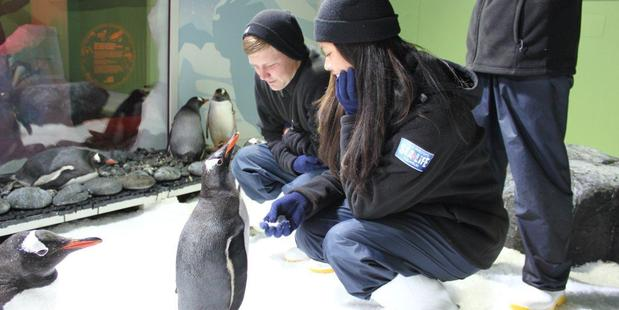 Aubin Dierick and bird handler Brianna Smith say gidday to a gentoo at Kelly Tarlton's new Penguins on Ice experience. Photo / Supplied
