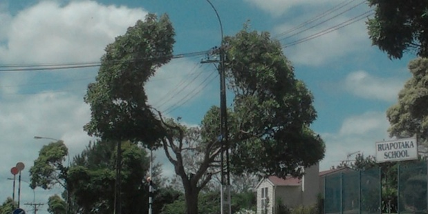 Sue Wallace spotted Auckland Council's creative pruning to avoid power lines on Tripoli Rd, Panmure. Photo/Supplied