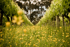 Celebrate riesling this summer. Photo / NZH