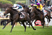 Habibi is likely to have her final lead-up race for the NZ Derby in the Avondale Guineas. Photo / Natalie Slade