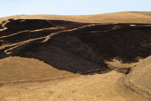 A lack of wind enabled three helicopters and fire crews to contain a Te Hauke grass fire on Monday. Photo / Duncan Brown