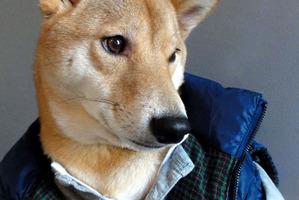 Photo / Menswear Dog