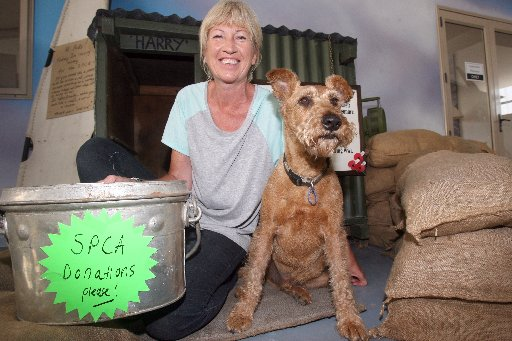 GOOD WORK: Harry the Irish red terrier who raised $300 at Wings over Wairarapa for the Wairarapa SPCA. He is pictured at his kennel with owner Sara Randle at the Vintage Aviator WWI collection at Hood Aerodrome.