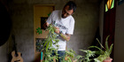 Marcelo Vazquez, a marijuana grower on the outskirts of Montevideo, Uruguay. Photo / AP