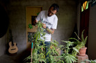 Marcelo Vazquez, a marijuana grower on the outskirts of Montevideo, Uruguay. Photo / AP