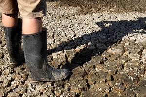 2013 began with the worst drought in 67 years. Photo / NZ Herald