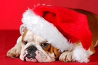 What makes you feel grumpy at Christmas? Photo / Thinkstock