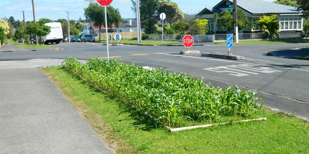 "Revolt! ""In Pt Chevalier someone is saying to Auckland City that they are happy to look after the berm but on their terms ... with a corn patch. Good on them,"" says Paul France."