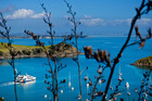The Fullers ferry trip to Waiheke Island doubles as a fabulous harbour cruise.