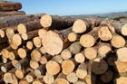 GOOD MONTH: The volume of New Zealand logs exported in November was up 17 per cent NZH/file