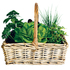 Green fingered friend: Planted herb basket, $24.99, from Kings Plant Barn. Ph (09) 846 2141.