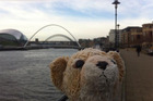 #lostbear's morning walk on the quayside. Beautiful day, tweeted Roar's finder, Lauren Bishop Vranch. Photo / Twitter