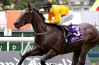 REIGNING CHAMPION: The Hombre is back to defend his Newmarket Handicap title at Ellerslie today.PHOTO/FILE