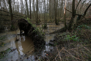A tree brought down by a rising stream is seen across a road near Godstone, England. Photo / AP