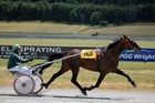 The Fiery Ginga is a place hope for the National Trot. Photo / Otago Daily Times