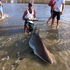 A big bronze whaler shark was pulled on to Matarangi Beach after a 45-minute tussle. Photo / Dion Clothier