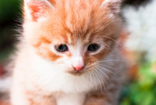 Do you mind neighbourhood cats padding around your property?Photo / Thinkstock