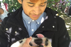 Jharden Davis, 16, with his 2-week-old piglet. Photo / Yvonne Tahana