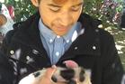 Jharden Davis, 16, with his 2-week-old piglet. Photo / Yvonne Tahana
