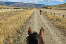 Choose a horse over a bicycle for a more tranquil way of exploring the Rail Trail. Photo / Pamela Wade
