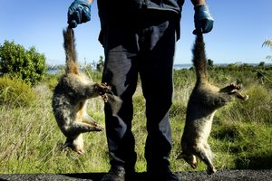 One of the big ideas up for discussion would tackle pests such as the possums that plague the New Zealand bush.  Photo / APN