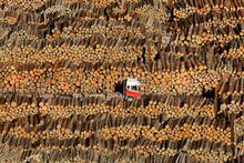 Log prices rose 2 per cent last month. Photo / Alan Gibson