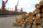 Timber prices increased last month but a high kiwi dollar ate into gains. Photo / Northern Advocate