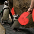 African penguins receive valentines from biologist Crystal Crimbchin at The California Academy of Sciences African penguin exhibit in San Francisco. Photo / AP