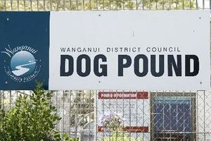Officers were unable to save a dog and her puppies that were dumped on the side of the road. Photo / Wanganui Chronicle