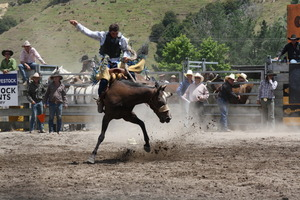 Injuries to running animals jerked to a halt or stressed into abnormal actions has led to the banning of rodeos in some countries. Photo / Supplied