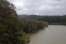 Green rivers in Hokianga. Photo / Supplied