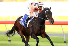 Black Caviar will start at very short odds today. Photo / Getty Images