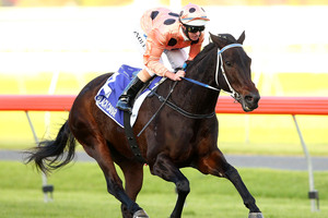 Black Caviar will be racing in the Black Caviar Lightning Stakes at Flemington on Saturday. Photo / Getty Images