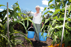 Yvonne Dabb has considered giving up her garden since her water bills sky-rocketed. Photo / Doug Sherring