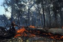 Trees are seen on fire as wildfires swept through the township of Seaton, Australia. Photo / AP 