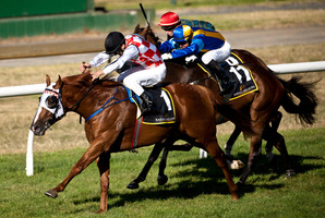 Choice Bro has drawn well at two for the Avondale Guineas at Ellerslie on Sunday. Photo / Dean Purcell