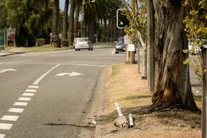A marker post lies on the ground after a car hit it on Kennedy Rd, Napier. Photo / Warren Buckland