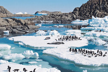 Bryan Storey says the project will take place in the Ross Sea and will also look at how over fishing is affecting seal and penguin populations. Photo / Thinkstock