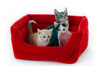 Each year, 67% of cat owners take their pets to the vet. Photo / Thinkstock