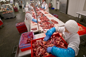 The Organised Crime and Corruption Reporting Project (OCCRP) identified an intermediary firm as playing a pivotal role in shipping horsemeat across Europe. Photo / AP