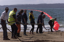 The Southern Cross cable comes ashore on Takapuna beach back in 1999. Photo / NZ Herald