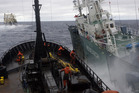 Sea Shepherd's protest ship and Japanese whaling ship Nisshin Maru collide.  Photo / Glenn Lockitch