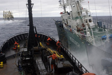 Sea Shepherd's protest ship and Japanese whaling ship Nisshin Maru collide.  Photo / Glenn Lockitch