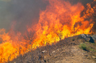 Victorian firefighters were feeling the strain of almost two months of difficult work. Photo / Thinkstock