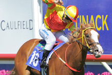 Miracles Of Life wins the Blue Diamond Stakes at Caulfield. Photo / Getty Images 
