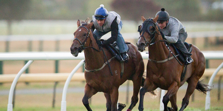 Rollout The Carpet (rails) works with Anakela at Ellerslie yesterday, taking 34.5 for their final. Photo / Greg Bowker