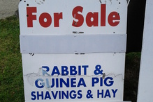 Maree saw this sign while out walking her dog in Howick....seems needlessly cruel!