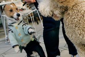 Pampered pooches meet at a Dog Festa in Yokohama. Photo / AP