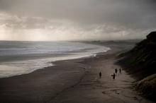 Muriwai Beach on Auckland's west coast. Photo / Dean Purcell