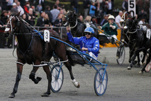 Smolda faces a stern test in the Chariots Of Fire at Menangle next Sunday after drawing badly. Photo / Christine Cornege